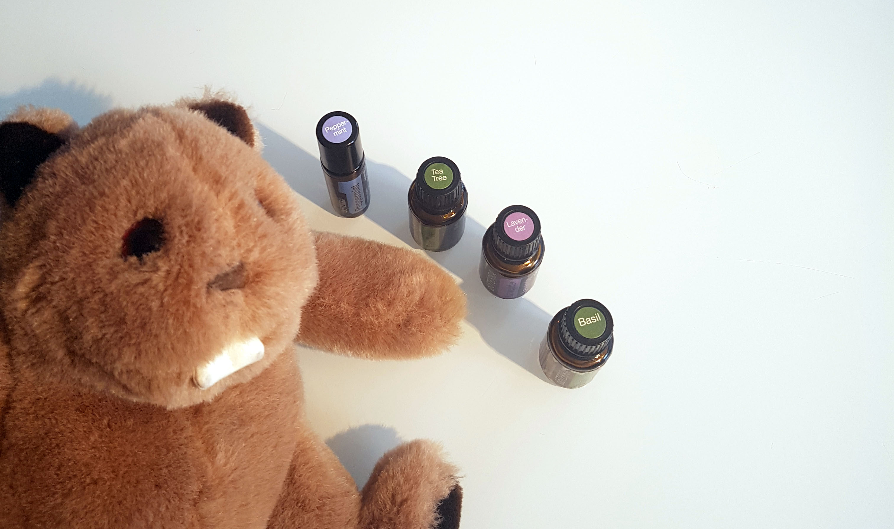 Stuffed animal and bottles of peppermint, tea tree, lavender and basil essential oils.